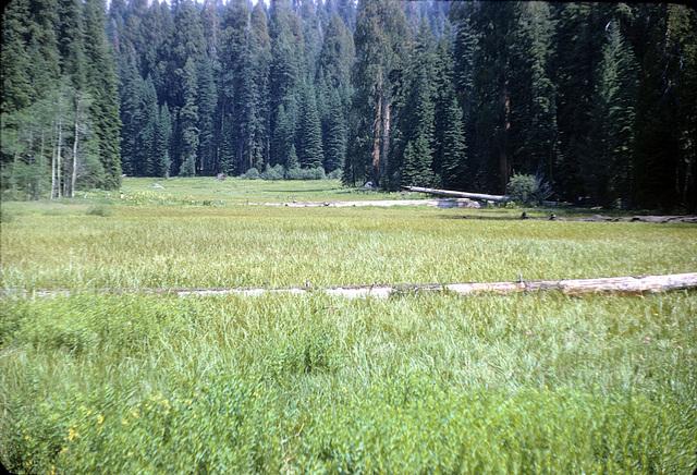 18-meadow_adj