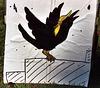 "Crow ""Eularia"" Target at Barleycorn, Sept 2006"