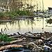Timaru wetlands