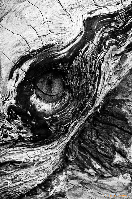 the eye of the cyclops/bw