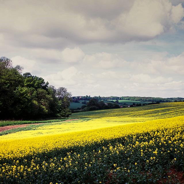 Hertfordshire view