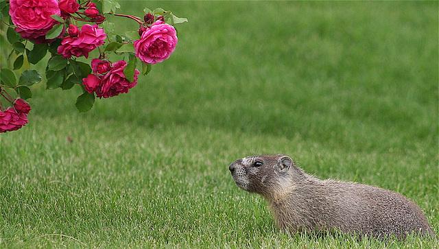 I smell roses.