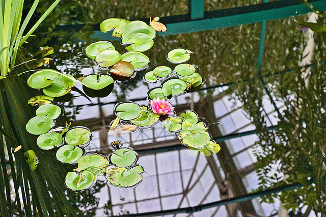 Reflection Under Monet's Bridge – New York Botanical Garden, New York, New York