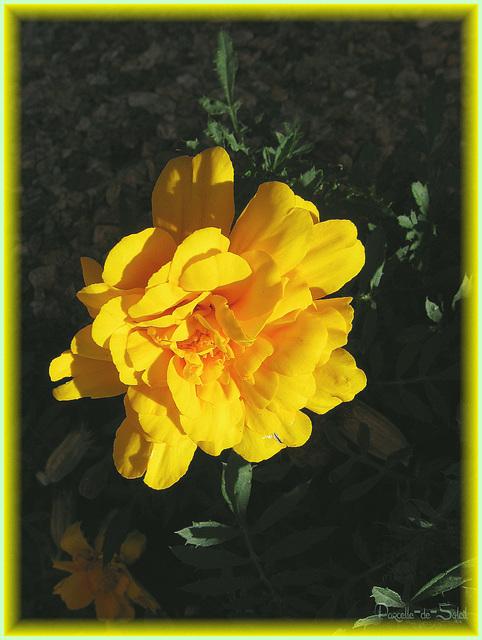 Fleur éblouie!