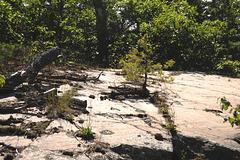 Outcrop, Pine Island