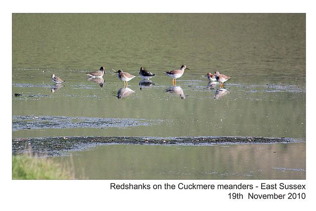 Redshanks - Cuckmere - 19.11.2010