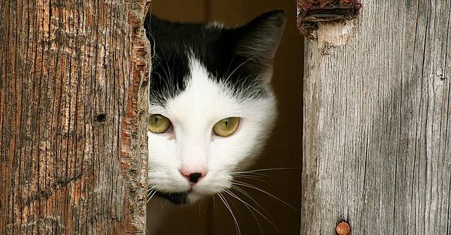 Barn cat at Onward Ranch.