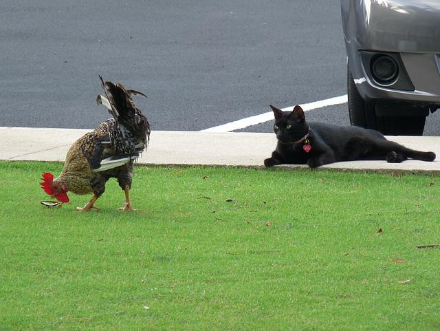 Paco & chicken
