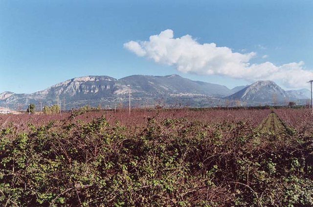 View of the Countryside from the site of Paestum, 2003