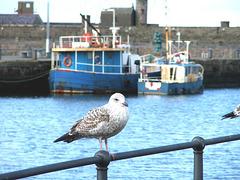 Harbour resident