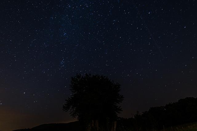 Baum vor Sternenhimmel - 20130811