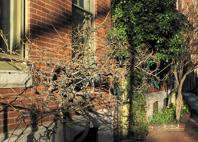 Philadelphia rowhomes' window tumbleweeds in lateday.