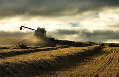 The Reaper, Foulis, Evanton, Ross-shire, Scottish Highlands