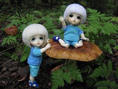 Mushroom spotting 1/3