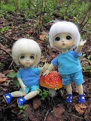 Mushroom spotting 3/3