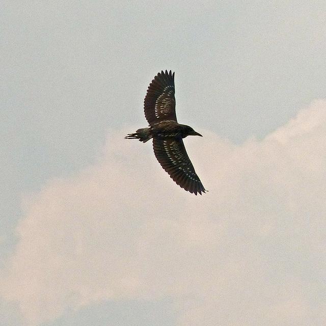 Beautiful wing pattern