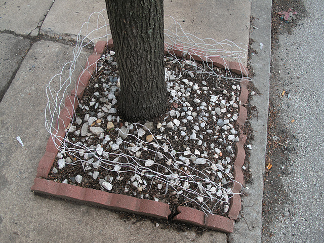 3-sided anti-animal fences for flowerbeds in sidewalk tree surrounds.
