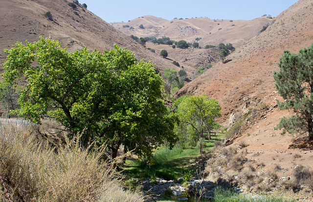 Stanislaus Del Puerto Canyon Rd (0583)