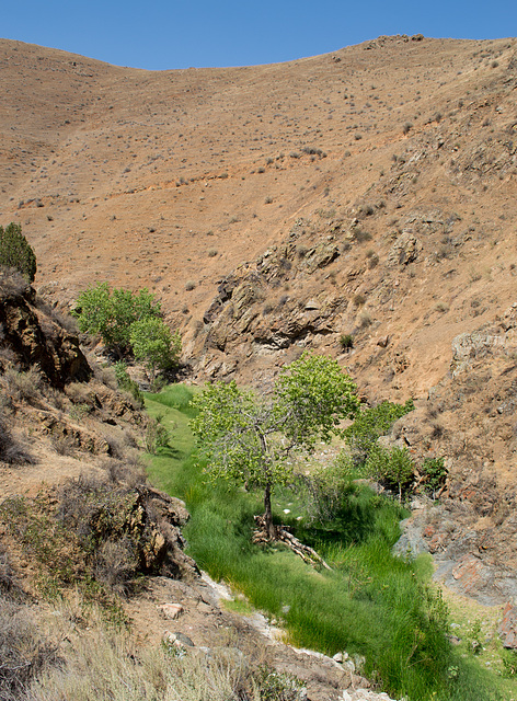 Stanislaus Del Puerto Canyon Rd (0584)