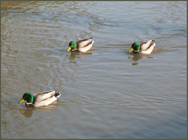 Alle meine Entchen schwimmen auf dem See ...