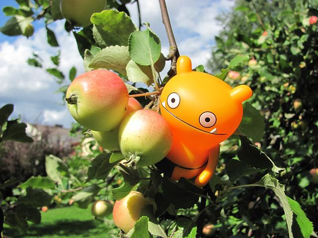 Wage in an apple tree