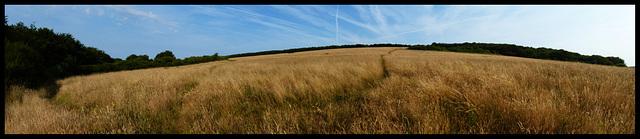 Gallop Hill