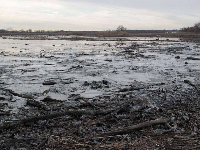 Probably the prettiest tidal marsh in metropolitan Philadelphia or else the whole entire Delaware Valley.