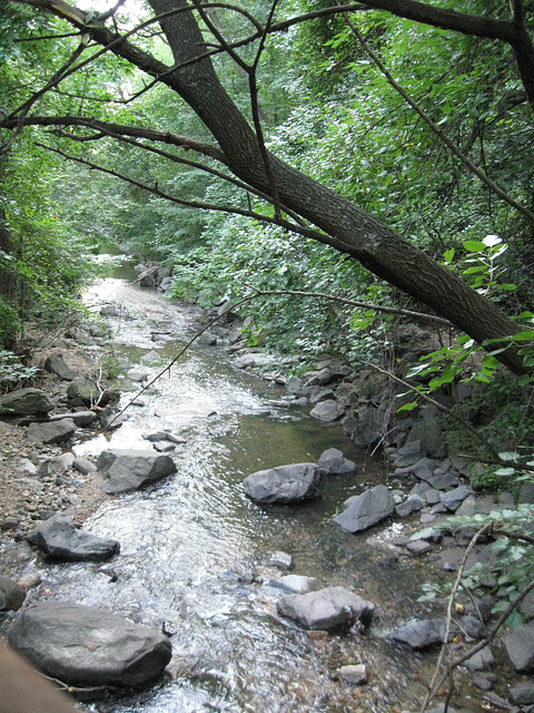 """Creek after the """"tropical storm"""""""