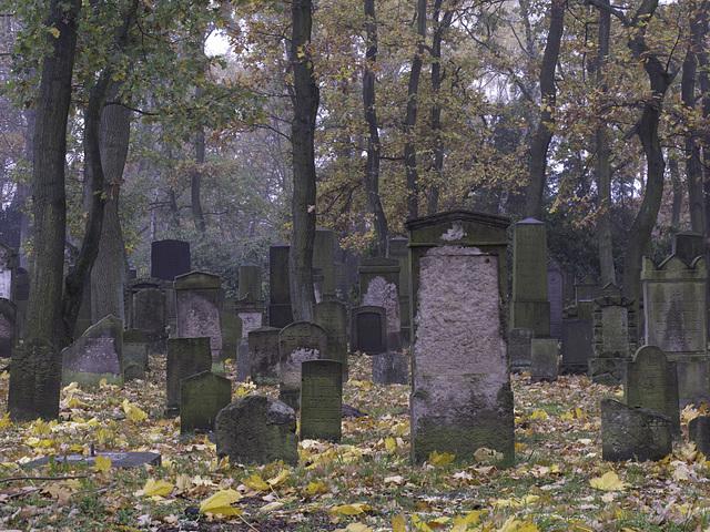 9 november - les feuilles mortes