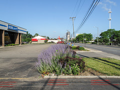 "Inhospitable garden of the former ""Bobb Automotive"" of Columbus Ohio, for powerlines to try to offer their insubstantiality of shade to some lucky few of the plants in."