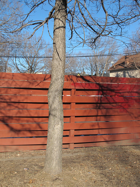 Here where five of the fence's eleven boards are forced bendingly around to the backside of the fencepost.