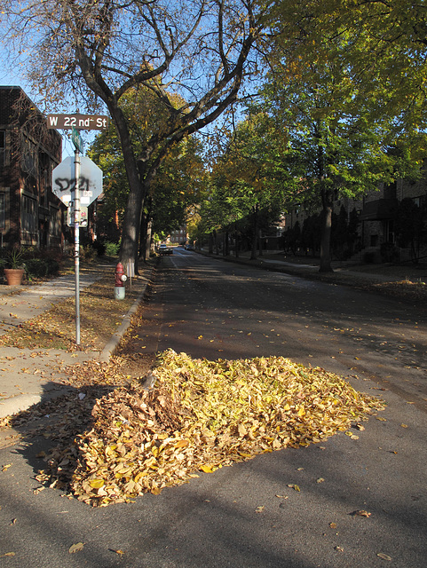 I see that the City Leafplow Drivers have been out this morning.