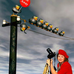The bird photographer (ON EXPLORE)