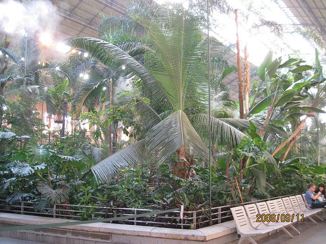 Garden under Atocha
