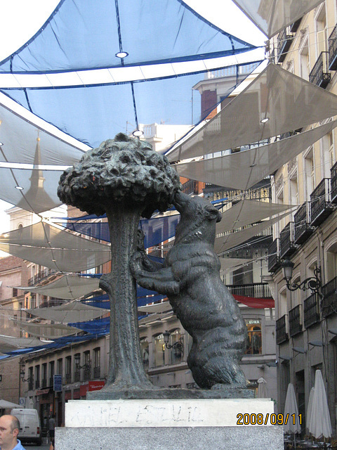 Bear & madrono tree