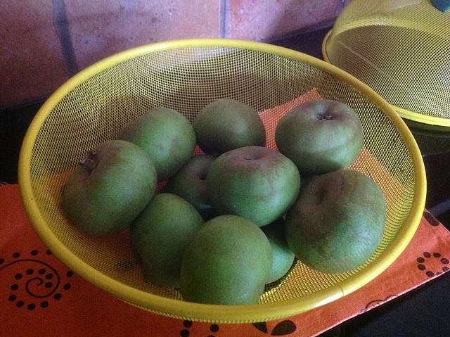 Pommes grises du Canada. Première récolte