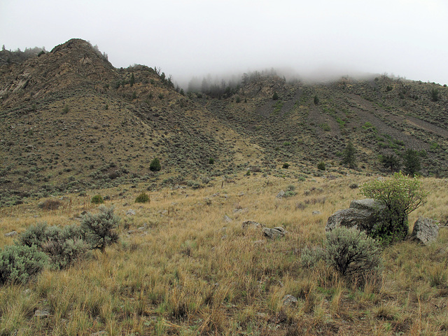 Here come the barreling loaves of fog, to moisten the sagebrush.