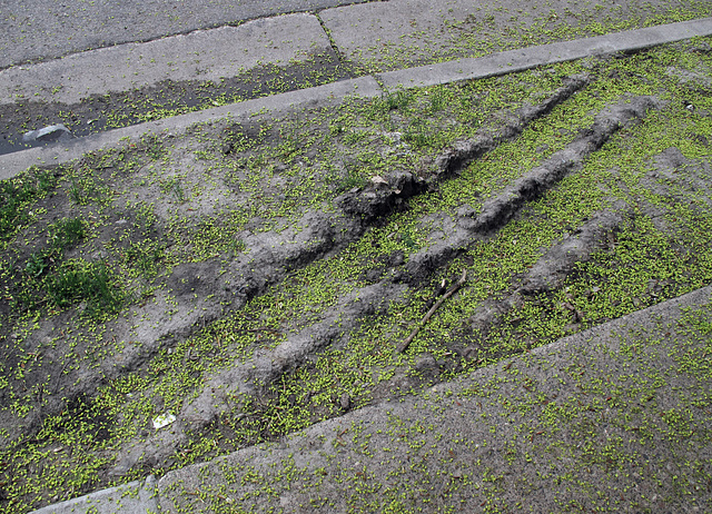 Muddy tiretracks fill up with deposits from trees, of allergens.