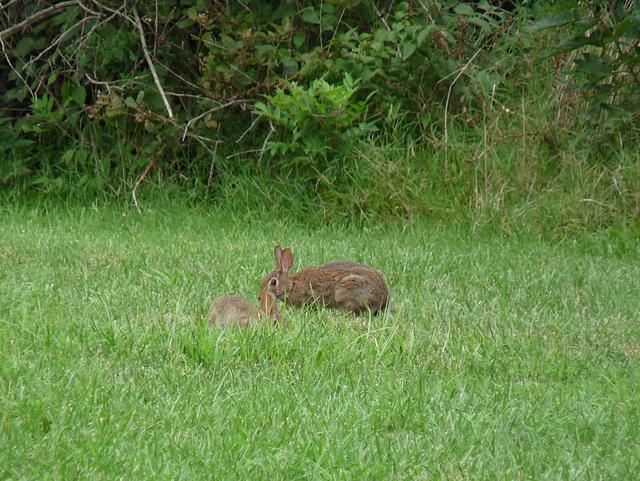omg bunnies
