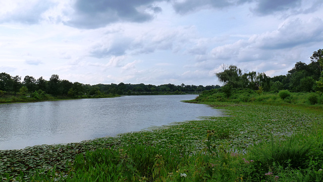 Lake Artemesia