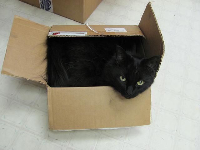 Mail Order Cat-A-Log