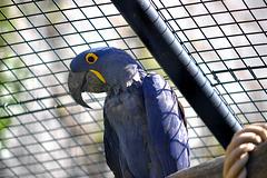 BESANCON: Un perroquet.