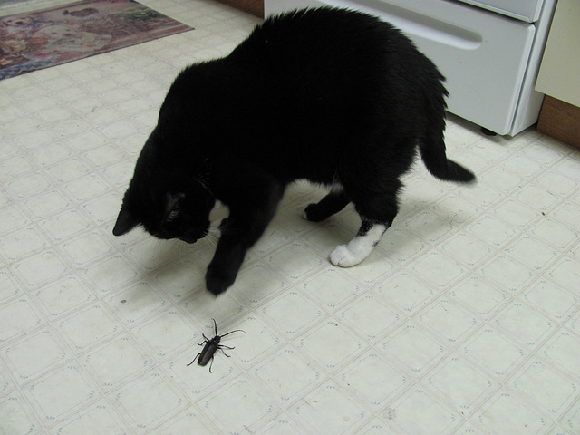 Smudge vs Bug