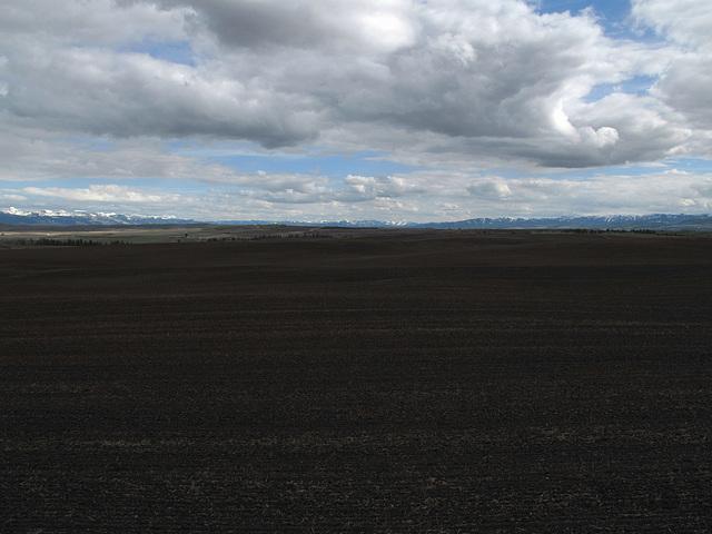 Idaho rich delicious dark potato dirt.