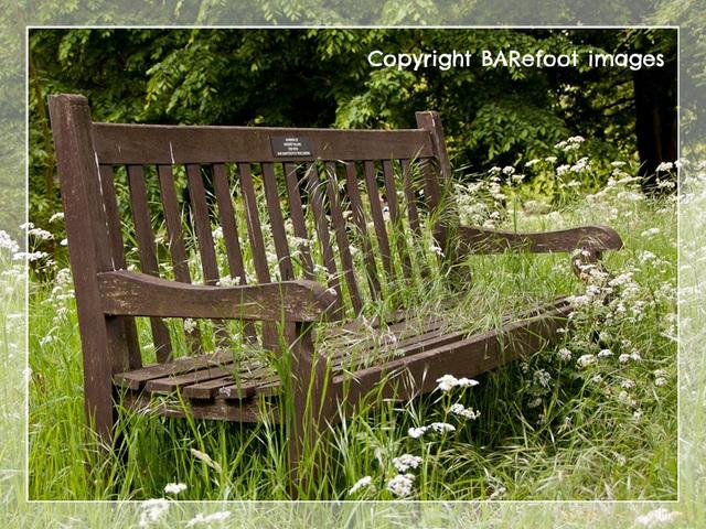 bench - kew gardens