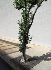 It is trees that are what will lead us into finding ways to learn how to develop personal appreciations for these kinds of architectural surfaces.
