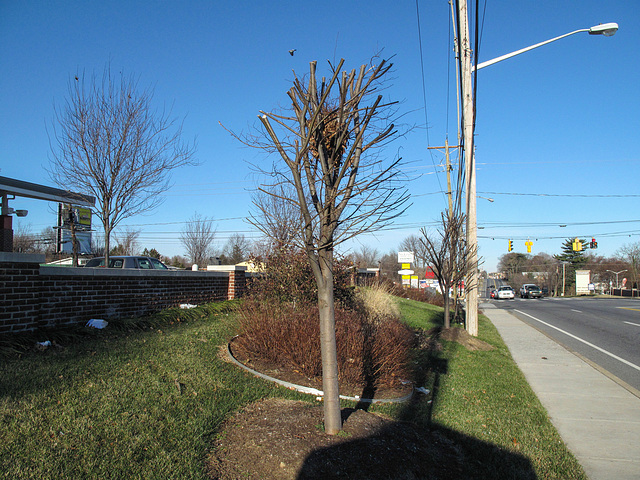 Tree Trouble in Northeastern Delaware Roadside Landscaping Job.