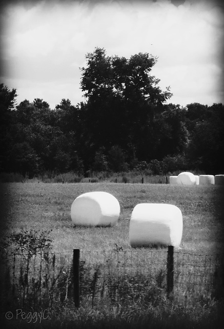 Marshmallow fields ..