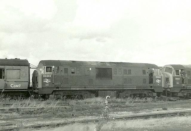NBL Type 2