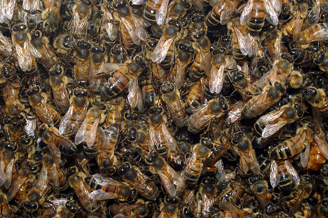 Busy Busy Bees